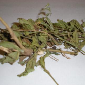 """Sida Acuta """"broomweed"""""""