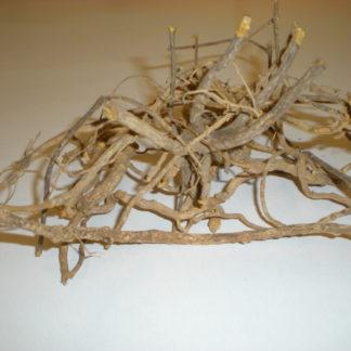 """Cryptolepis Sanguinolenta Root """"ghanain quinine"""""""