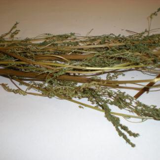 """Artemisia Annua """"sweet annie"""""""